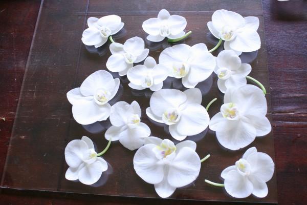 蘭の花で花器皿を作りたいガラス制作体験